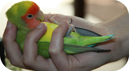 Tenir son perroquet