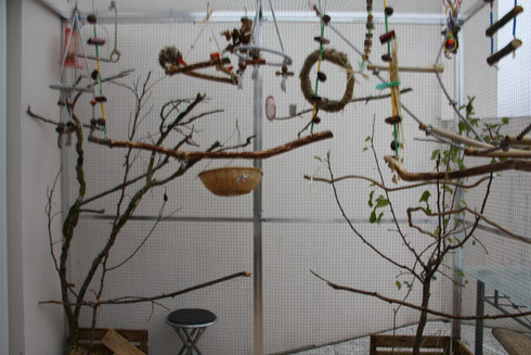 Aménagements d'une volière pour petites espèces de perruches et perroquets