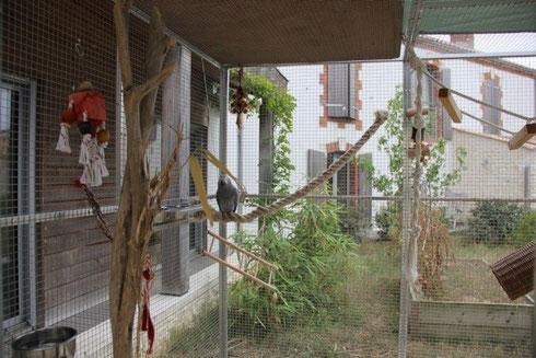 Aménagement d'une volière pour Gris du Gabon, chez Margaux Deman