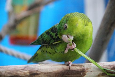 Fruits et légumes pour vos perroquets