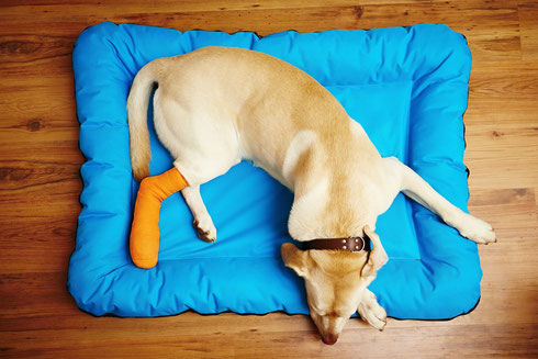 Faszientherapie für Hunde www.nadine-dapra.de