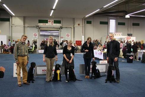 09.05.2010 - Dortmund VDH-Europasieger-Ausstellung Formwertnote: VP1
