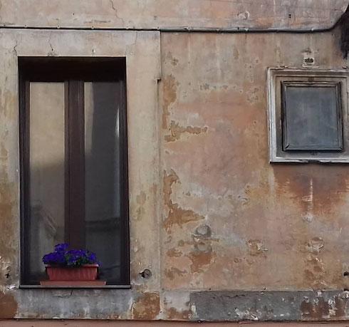 In via del Pie' di Marmo, tutto il fascino discreto d'un muro dall'intonaco scrostato e di un vaso di fiori viola