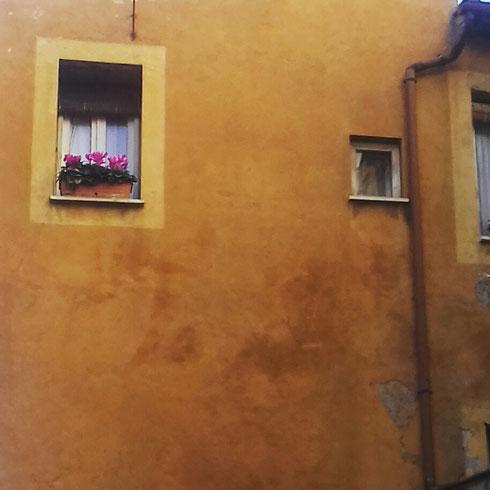 Finestra e ciclamini: un mix vincente valido anche a Trastevere