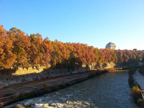 Pare che l'autunno sia la stagione migliore per far foto...direi che è vero!