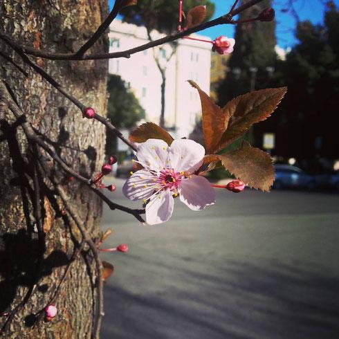 Anche gli alberi a primavera scrivono poesie. E gli stupidi pensano che siano dei fiori...