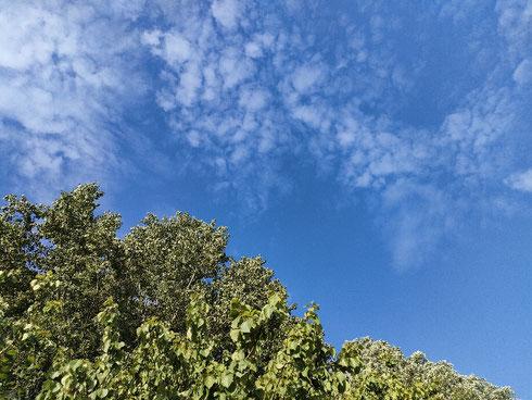 Venerdì verde e celeste.  Trovare la natura in città e restare incantati...