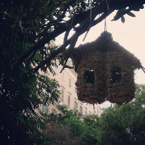Una mano gentile ha preparato un nido per i passerotti di piazza dei Quiriti