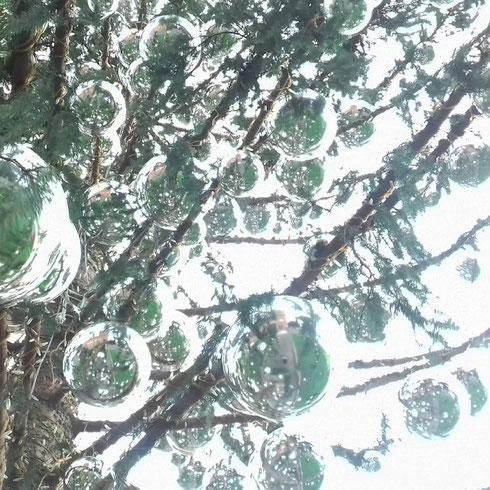 Incontri ravvicinati (ed un poco ritoccati) con Spelacchio, l'albero di Natale di piazza Venezia...