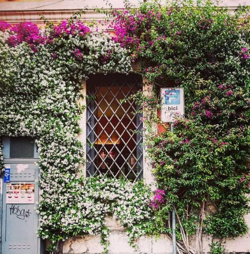 In questo maggio che odora di novembre, la foto di una parete in fiore è più una promessa che la realtà