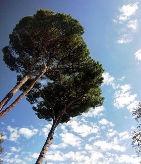 Cromoterapia per lunedì dal cielo grigio: il verde dei pini del foro Boario calma i nervi e favorisce l'armonia, il blu del cielo di un giorno d'ottobre tranquillizza e riduce lo stress...può bastare?