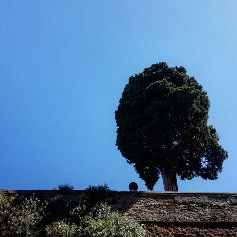 C'è questo quadrato verde in pieno centro che pochi tengono da conto: villa Aldobrandini in via Nazionale è un'oasi in mezzo al traffico. Ci si arriva salendo da via Mazzarino, e più si sale più si fa strada in noi l'impressione di straniamento...ma siamo davvero in un posto del genere al centro di Roma? Quando usciamo da qui, chiedendoci ancora se esista davvero quel giardino, gli alberi che occhieggiano su via Panisperna ci confermano di sì