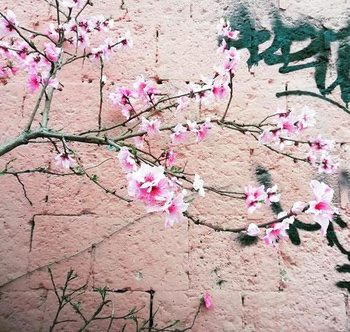 Finalmente è sbocciata la primavera, anche sui muri scrostati e scarabocchiati di via Ostiense