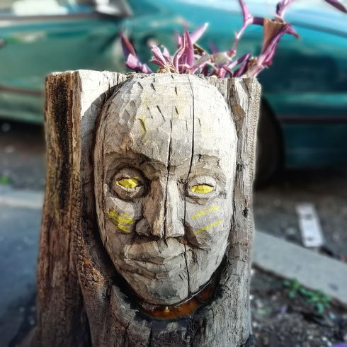 C'è chi ha la testa di legno, ma almeno dentro ci nasce una piantina