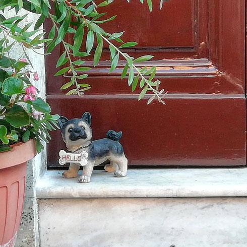 Lunedì mattina, nemmeno un cane che ti saluti...ah no, eccolo