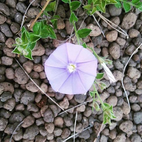 La tradizionale gita di Pasquetta è salva...vale un fiore come gita fuori porta?