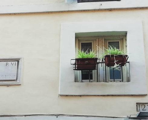 E se la felicità fosse una piccola finestra con due piantine verdi da guardare appena svegli? Succede in via del Governo Vecchio