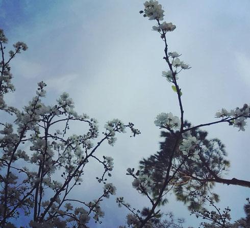 La pioggia non ci bagna, il freddo non lo sentiamo quasi, le previsioni di neve ci fanno un baffo...la primavera sta arrivando!