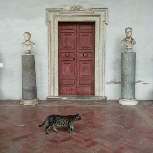 Visitare il museo nazionale romano, nella fantastica sede delle terme di Diocleziano, e passare il tempo a fare i grattini ai gatti che si muovono con disinvoltura tra il chiostro e le sale espositive. Sarà un nuovo servizio offerto ai visitatori?