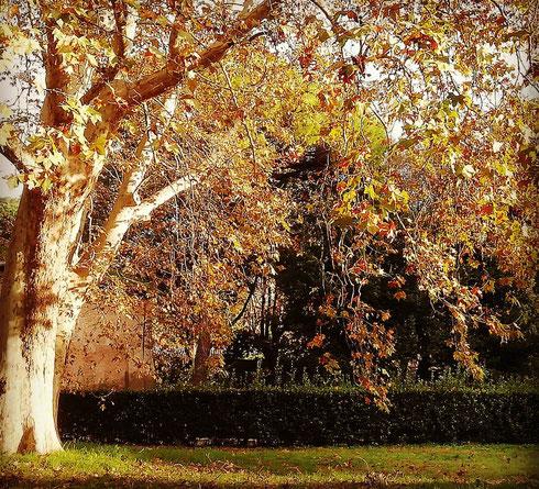 Foliage de noantri alle terme di Caracalla
