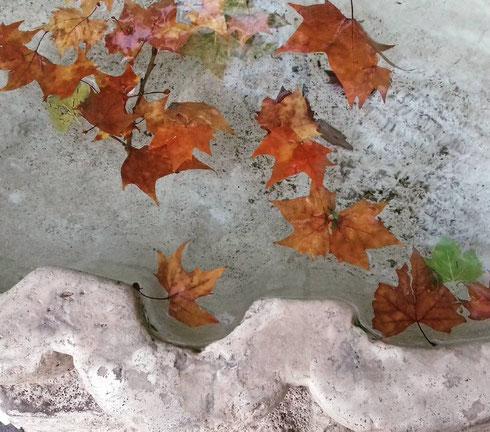 Cadono le foglie...anche nella fontana delle Api di piazza Barberini