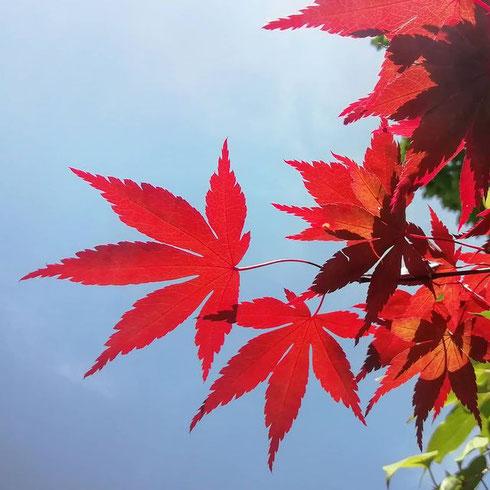 Entrare nell'orto botanico e trovarsi in un attimo in Giappone
