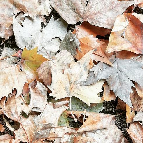 In un giorno di pioggia che per la città si promette battente, il mio pensiero va alla innocue foglie cadute dai rami che, senza nessuno che la raccolga, intaseranno caditoie e tombini...ah! La vertigine vivere nella Capitale...