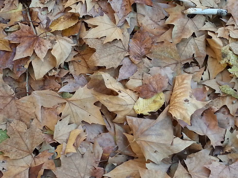 Che bello camminare su un soffice tappeto di foglie che copre le strade...speriamo non intasi le caditoie dei marciapiedi!!!