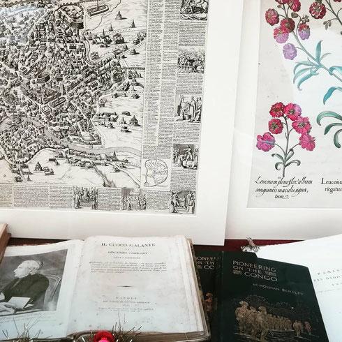 Una pianta antica, una pianta nel senso più botanico del termine, la vetrina della libreria Ex Libris di via dell'Umiltà è terribilmente affascinante