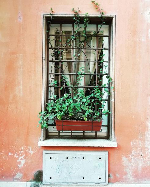Un muro rosso, una finestra, una pianta verde che si affaccia timidamente su via Giulia...come desiderare di più?