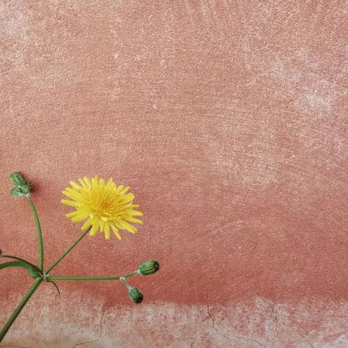 Quanto mi piacciono i fiori che spuntano un po' a casaccio lungo muri colorati apparentemente anonimi