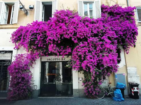 Piazza di Pietra non è mai stata così colorata...anche i cassonetti sembrano brillare di bellezza riflessa