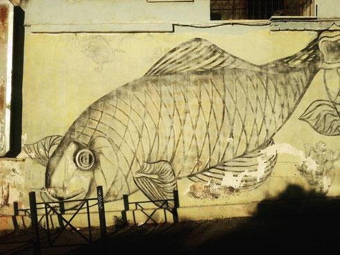 Spiaggiato su un muro del Pigneto, l'enorme pescione rimpiange l'acqua e soffre il caldo...