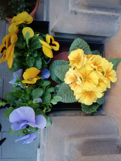 Anche in una giornata freddissima, mi basta vedere qualche fiore in via del Tritone per sognare già la primavera