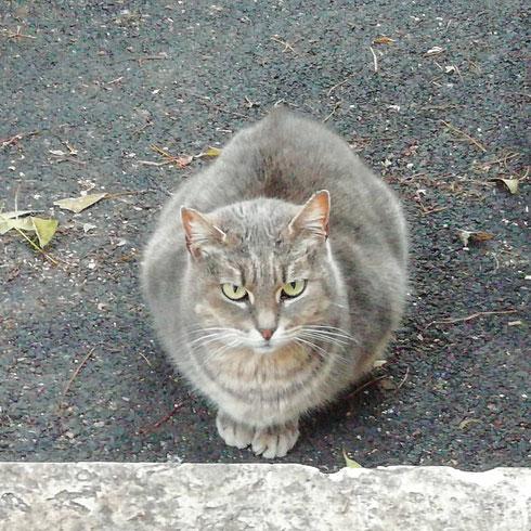 Quando incontro un gatto per strada è una questione di pochi secondi: gli occhi si incrociano, i muscoli si tendono, i sensi si fanno tutti più acuti. Si stabilisce un equilibrio instabile, che si spezza al primo movimento dell'uno o dell'altra. Come due pistoleri in un film di Sergio Leone, restiamo immobili aspettando che l'altro faccia la prima mossa. Ma ecco che lui si distrae, muove un orecchio: mi avvicino per sferrare il mio attacco micidiale di grattini sotto al collo ma lui, maledizione, è pure stavolta più rapido e scappa. Me l'hai fatta un'altra volta gatto, ma la prossima sarò più veloce di te. E allora sì, saranno grattini