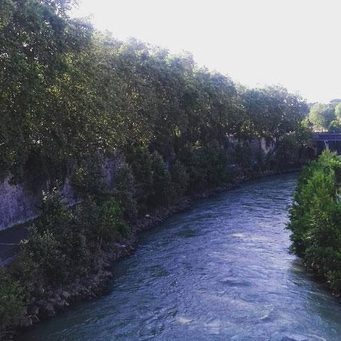 Sarà il caldo, ma a guardare oggi il Tevere dall'isola Tiberina viene proprio voglia di fare un bagno