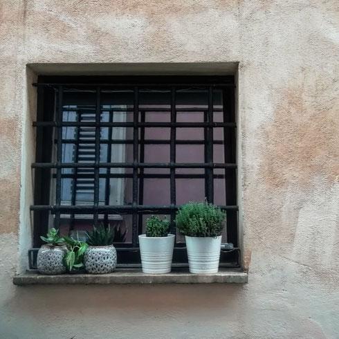 Un giorno censirò tutte le finestre in fiore della città, partendo dal rione Monti
