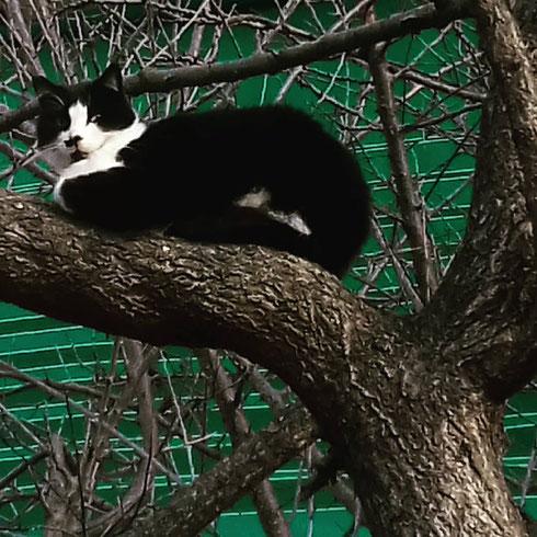 La primavera è ancora lontana, ma già sugli alberi qualcosa di muove...come si chiamerà questo strano frutto bianco e nero?