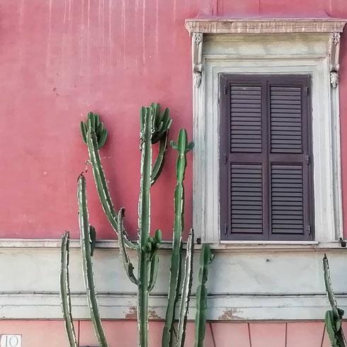 Quando si dice lunedì del cactus...siamo a Monti, dalle parti di via degli Zingari