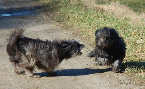 Lady bellt Mayra an, damit sie weiter rennt