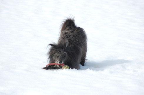11.3.14 Tagesausflug nach Bernau - das erste Mal Schnee in diesem Winter