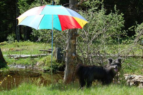 6.6.14 heiss und sonniger Tag in Bernau