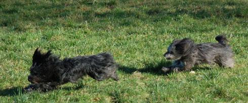 12.2.14 Bilder ohne Worte von zwei Hunden, die Spass miteinander haben