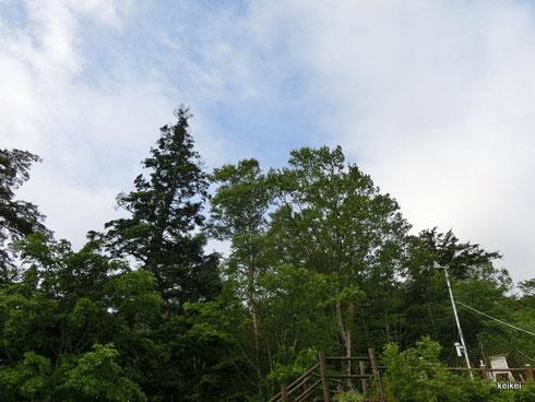 雲取山 東京百名山