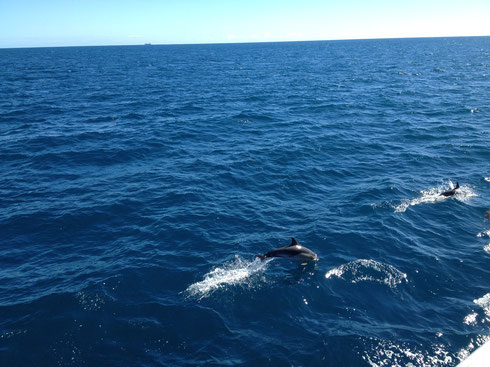 delfine-paihia-hole-in-the-rock