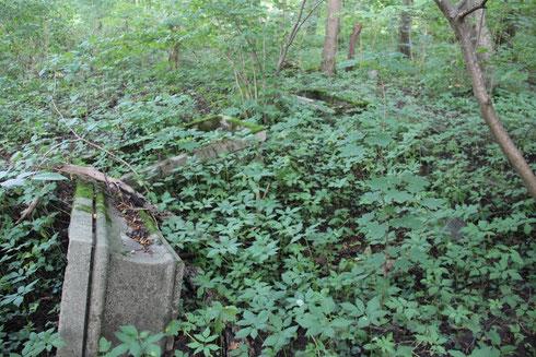 Alter Friedhof-heute