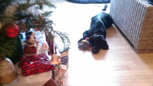 🎄frohe Weihnachten 🎅