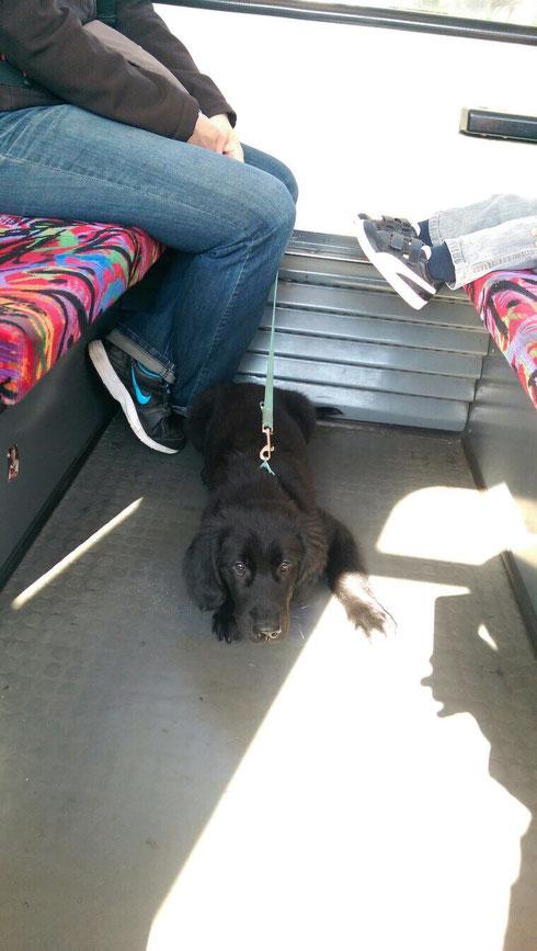 🚋25.08.2014 erster Ausflug mit der Straßenbahn 🚋