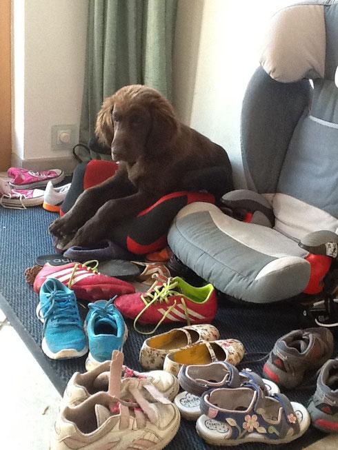 ....alle meine Schuhe ..... Fertig los...