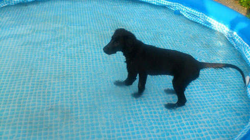 🐬💦20.09.2014 letztes Bad im Pool 🐬💦